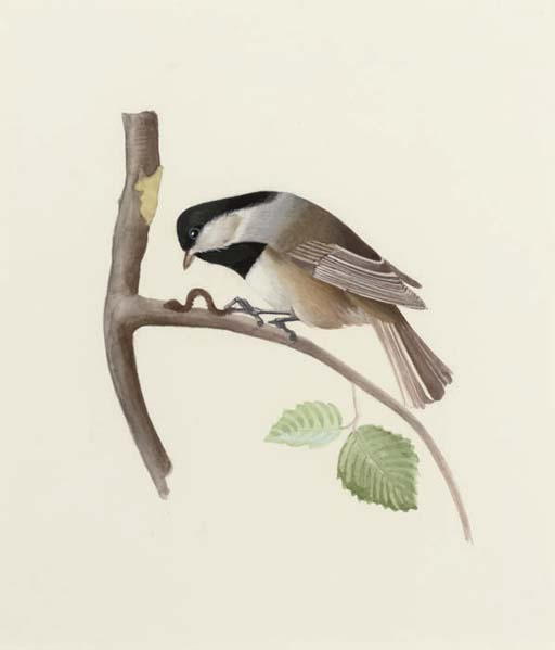 A set of 23 ornithological studies