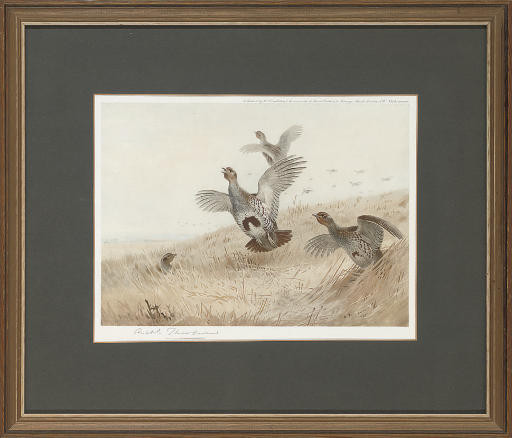 After Archibald Thorburn