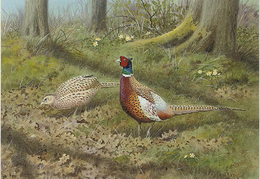 Foraging pheasants