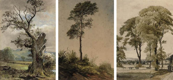 Three studies of trees in various landscapes (all illustrated)
