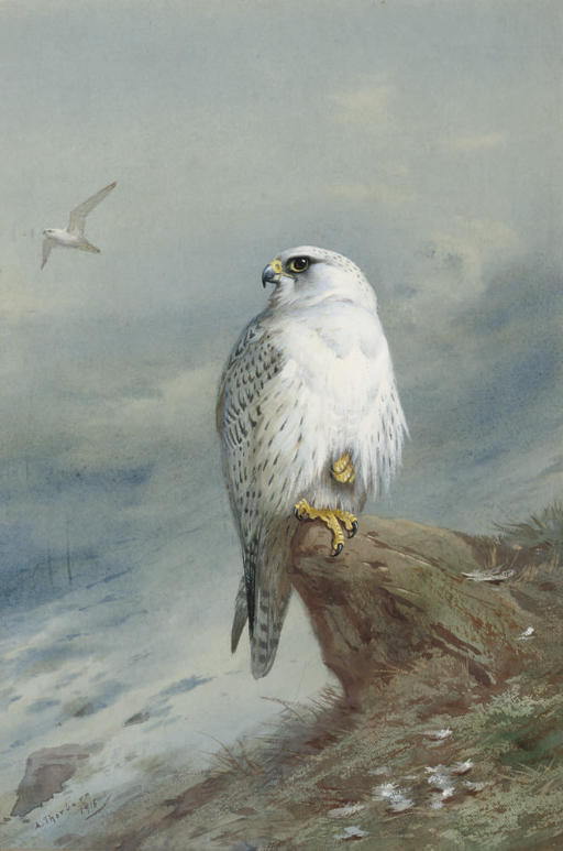 Archibald Thorburn (1860-1935)