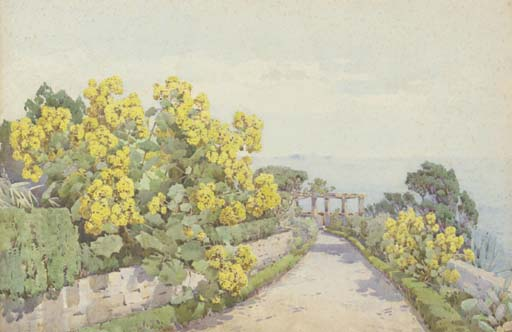 A group of Senecio, in the grounds of Reids Hotel, Madeira
