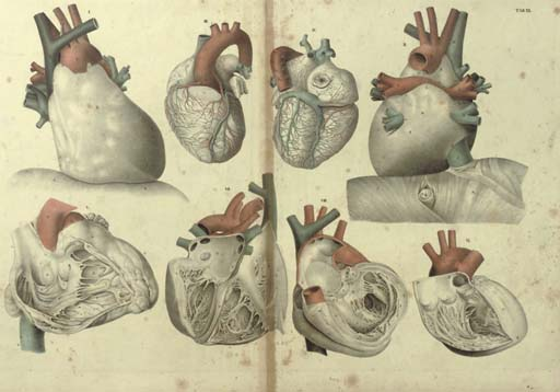 Twenty anatomical lithographs,