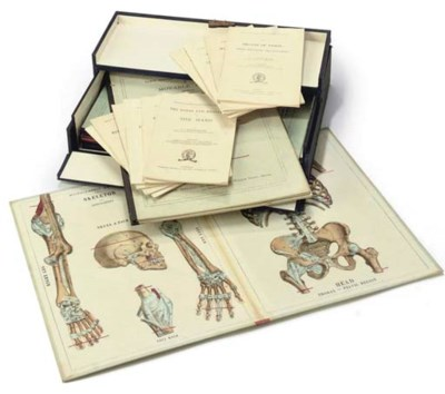 A cased set of eleven anatomic