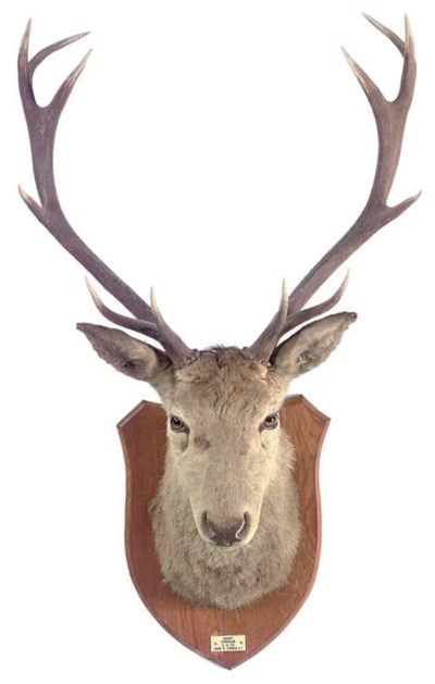 A HIGHLAND STAG'S HEAD TROPHY