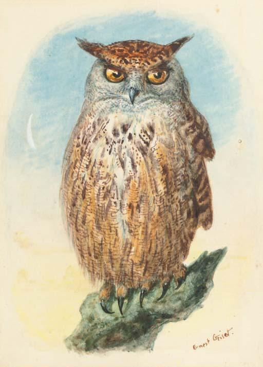 Study of a long-eared owl