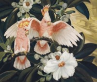 Rose Breasted Cockatoos