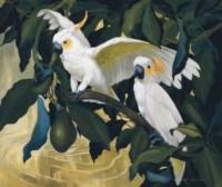 Cockatoos and Avocado