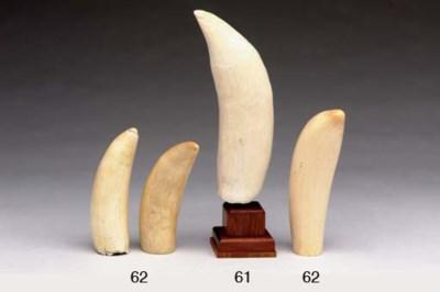 Three Large Whale's Teeth