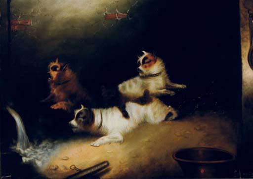 Terriers alert