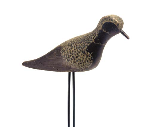 AN EARLY BLACK BELLIED PLOVER