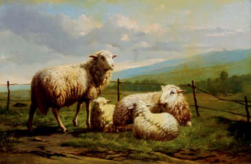 Sheep resting in a pasture