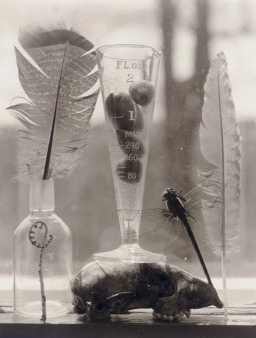 Untitled (Dragonfly & Feathers), 1998
