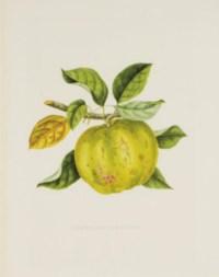 [Botanical Studies]: Four Plates