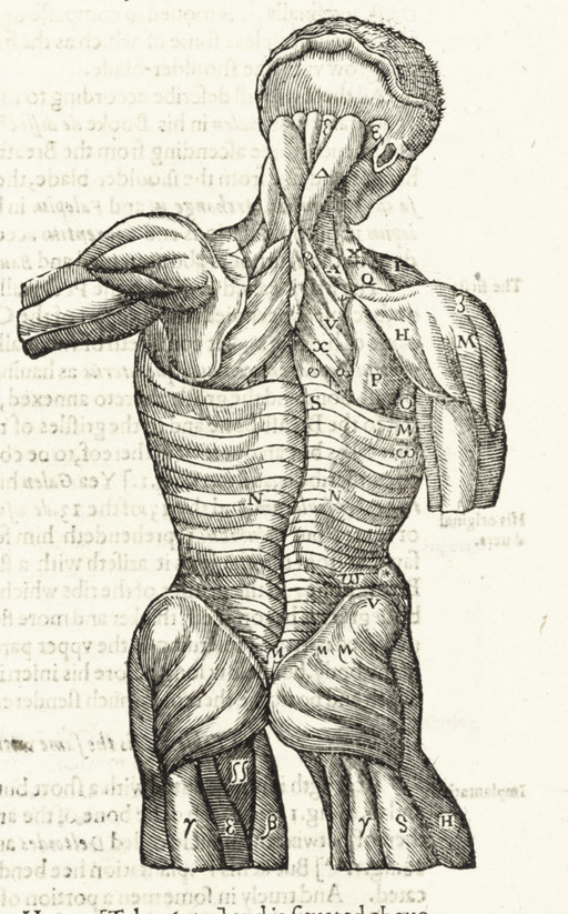 CROOKE, Helkiah (1576-1635). Microcosmographia [In Greek]. A Description of the Body of Man. Together with the controversies thereto belonging. Collected and translated out of all the best authors of anatomy especially out of Gasper Bauhinus and Andreas Laurentius. London: William Jaggard, 1615.