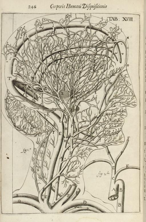 HIGHMORE, Nathaniel (1613-1685). Corporis humani disquisitio anatomica; in qua sanguinis circulationem in quavis corporis particula plurimis typis novis... prosequutus est. The Hague: Samuel Brown, 1651.