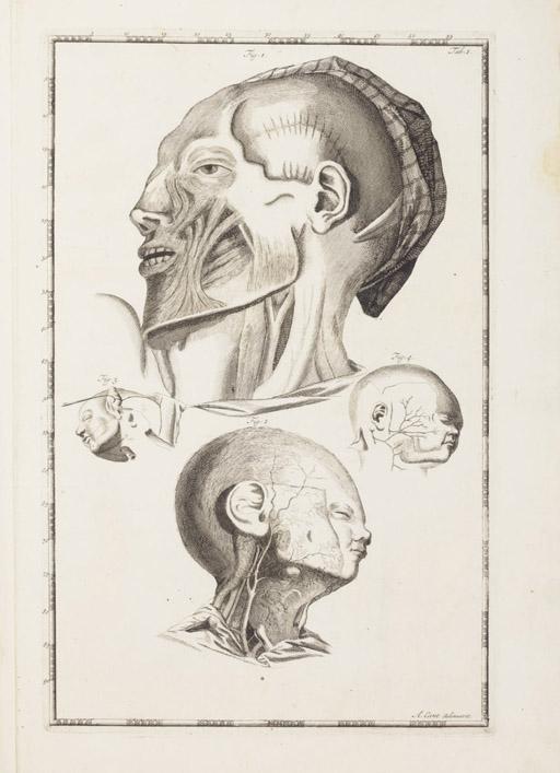 CANT, Arent (1695-1723). Impetus primi anatomici ex lustratis cadaveribus nati. Leiden: Peter van der Aa, 1721.