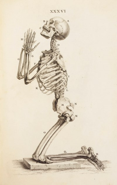 CHESELDEN, William. Osteograph