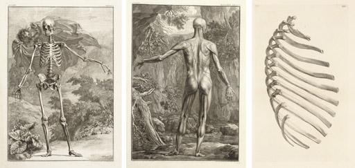 ALBINUS, Bernhard Siegfried. Tabulae sceleti et musculorum corporis ...
