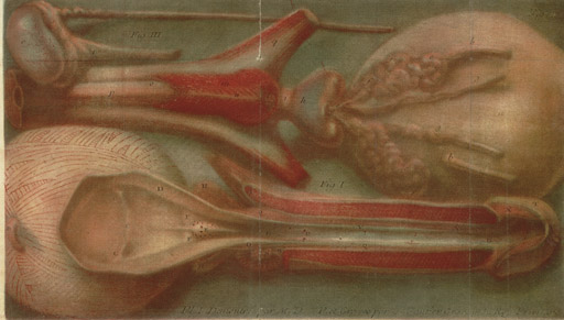 DARAN, Jacques. Observations chirurgicales, sur les maladies de l'urethre. Paris: de Bure l'aîné, 1750.