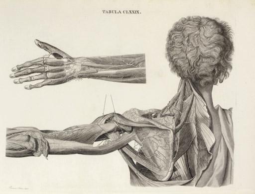 CALDANI, Leopoldo Marco Antonio (1725-1813) and Floriano CALDANI (1772-1836). Icones anatomicae; Iconum anatomicarum explicatio. Venice, 1801-14.