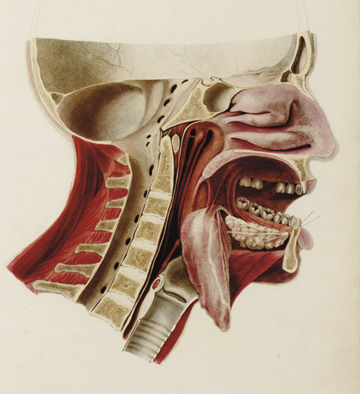 WATT, John James (1763-1819). Anatomico-chirurgical Views of the Nose, Mouth, Larynx & Fauces. London: Printed for the Author, 1809.