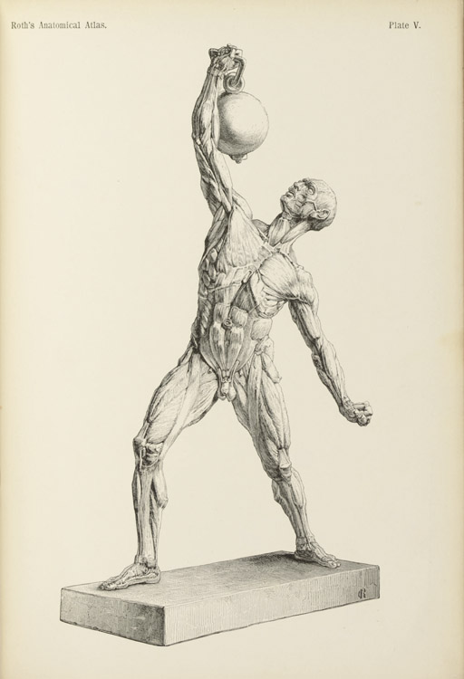 ROTH, Christian (b.1840). The Student's Atlas of Artistic Anatomy. Edited by Charles Egerton Fitzgerald. London: H. Grevel & Co., 1891.