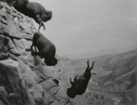Untitled (Buffaloes), 1988-89