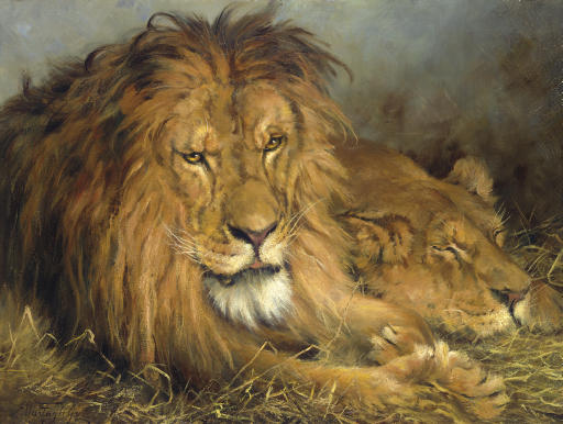 A Lion and a Lioness