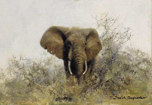 david shepherd  british  b  1931    an elephant
