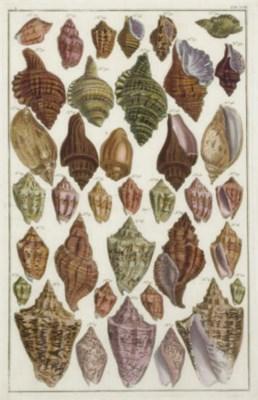 After Albertus Seba (1665-1736