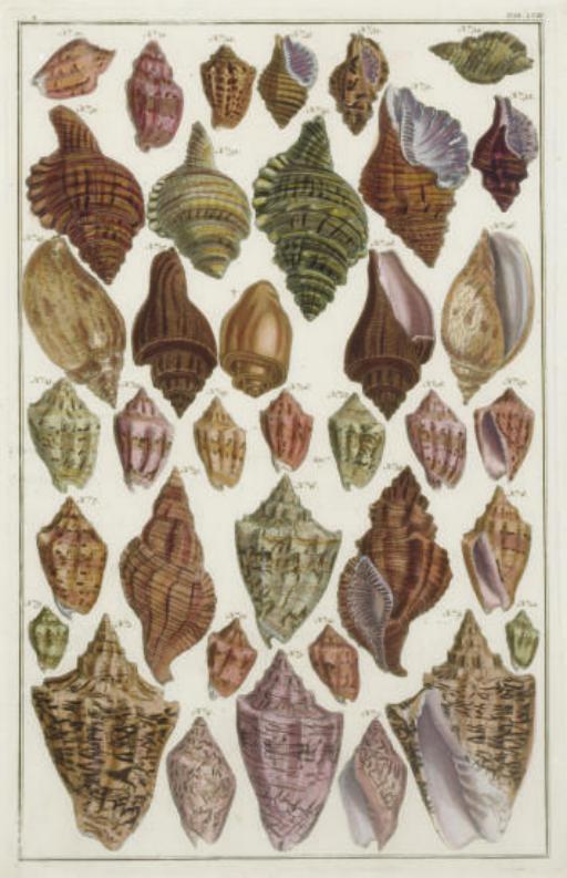 [Shells]: Six Plates