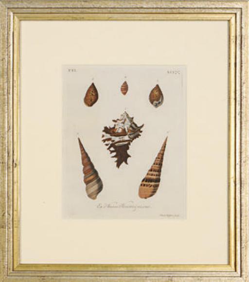Les Délices des yeux et de l'esprit, ou Collection Generale des Differentes Espèces de Coquillages que la mer renferme: Six Plates