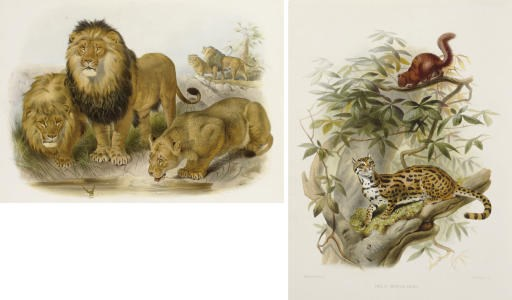 ELLIOT, Daniel Giraud (1835-19