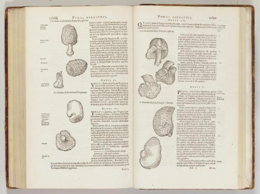 [L'ECLUSE, Charles de (1526-16