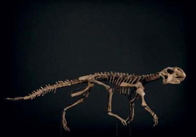 PSITACOSAURUS
