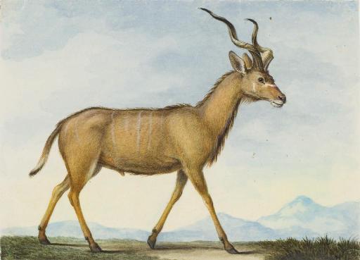 Une antilope vue de profil vers la droite dans un paysage montagneux
