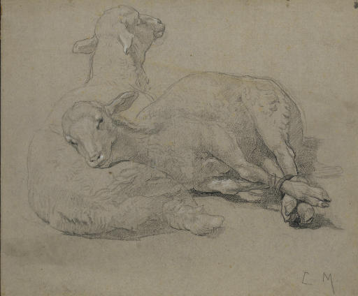 Deux agneaux allongés dont l'un avec les pattes liées