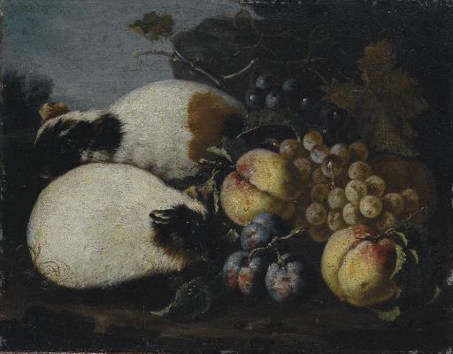 Uva, pesche e prugne con criceti