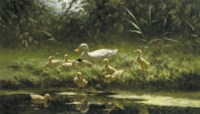 Ducklings on a sunlit riverbank