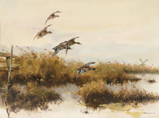 Descending ducks
