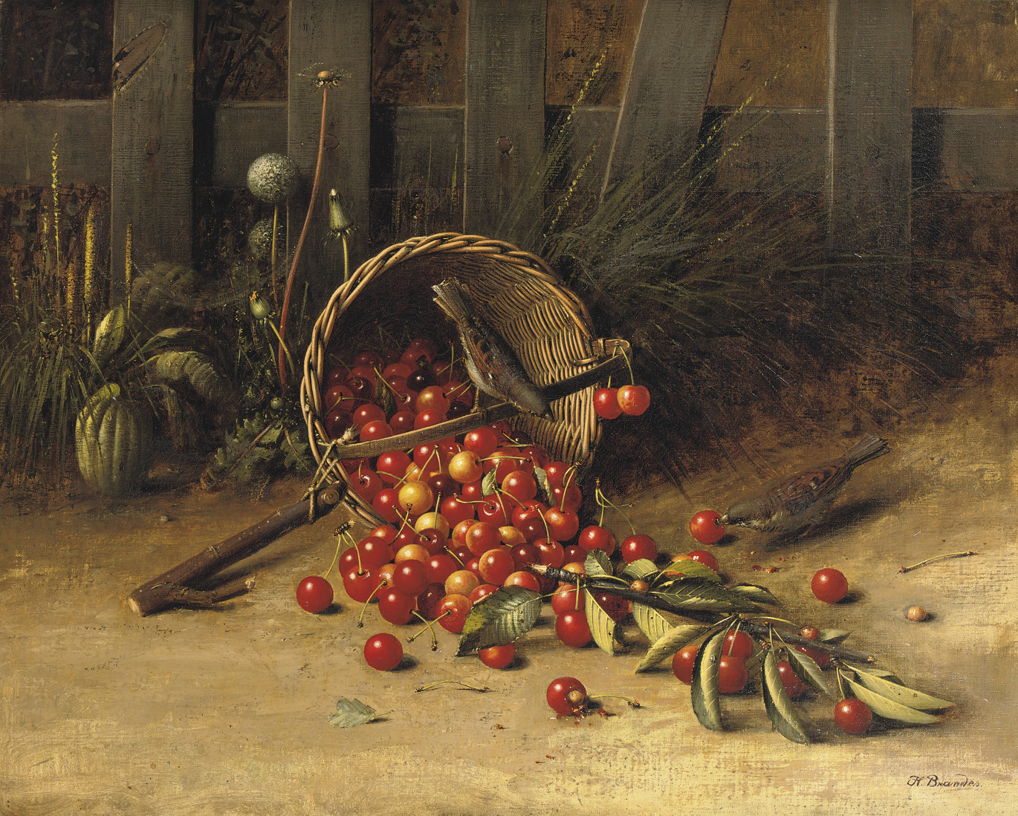 The cherry thieves