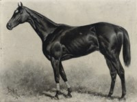 Dr Rice, winner of the Brooklyn Handicap 1894, Gravesand