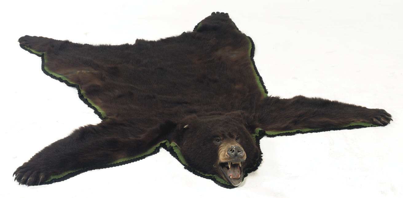 A STUFFED AND MOUNTED BLACK BE