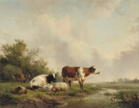 Resting cattle in a meadow