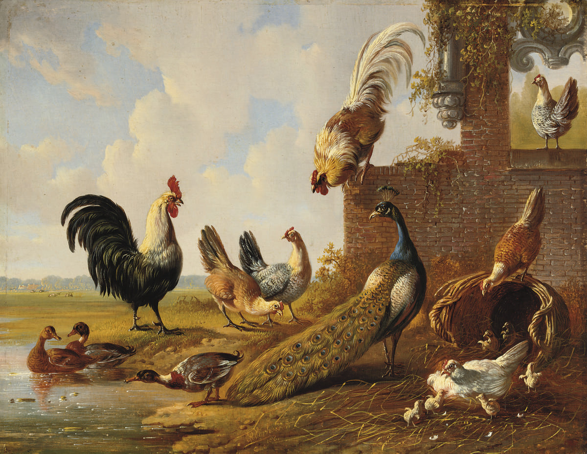 Poultry near a ruin