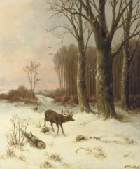 A stag on the edge of a forest