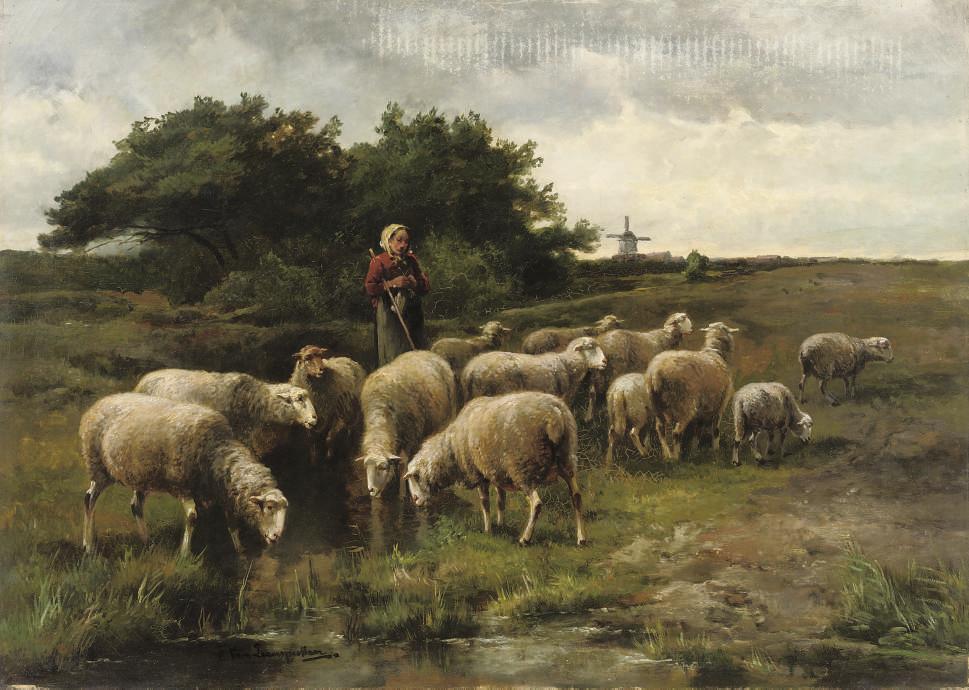 Sheep near a stream