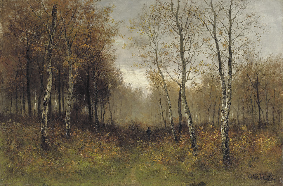 A walk in the birch forest