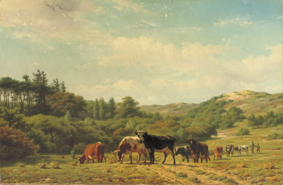 Cattle near the dunes